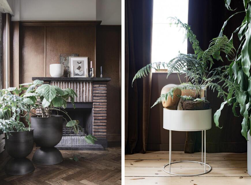 Sfeerbeeld 5 - Tropische planten