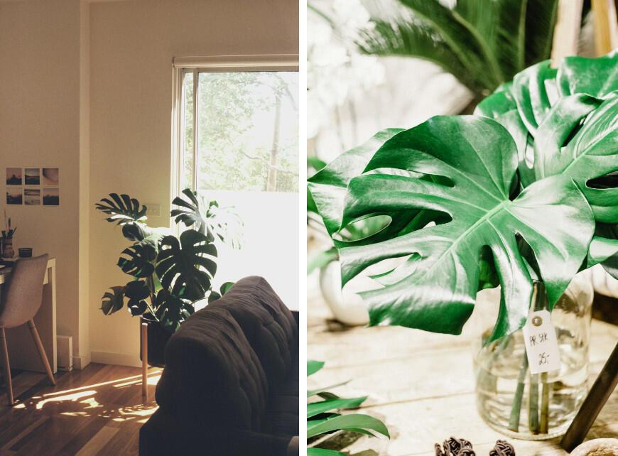 Luchtzuiverende planten - Sfeerbeeld 2