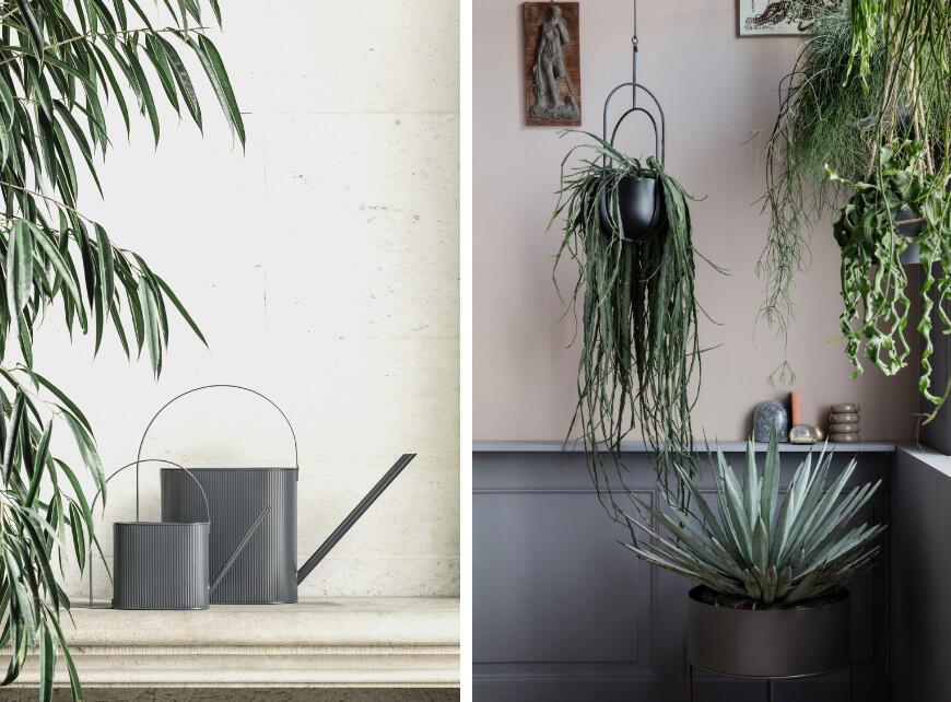 Sfeerbeeld 2 - Tropische planten