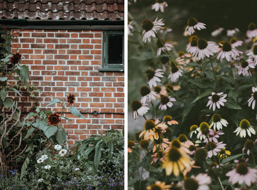 Sfeerbeeld 4 -Planten met witte bloemen