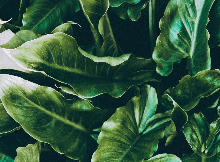 Sfeerbeeld 4 - Groenblijvende planten