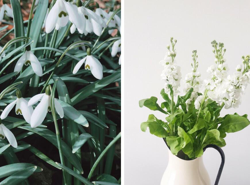 Sfeerbeeld 2 - Planten met witte bloemen