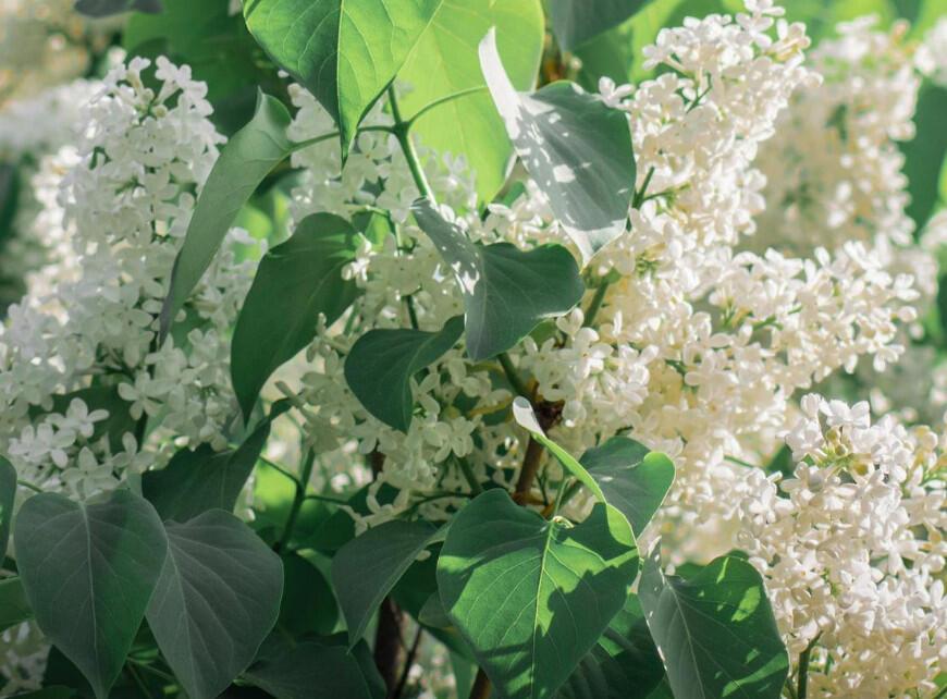 Sfeerbeeld 5 - Planten met witte bloemen