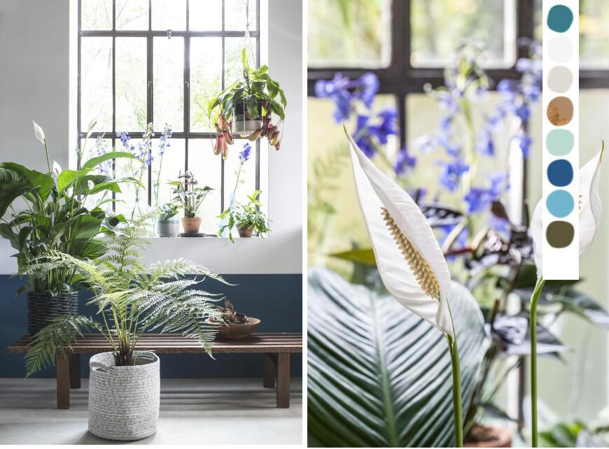 Mooie kamerplanten - Sfeerbeeld 2