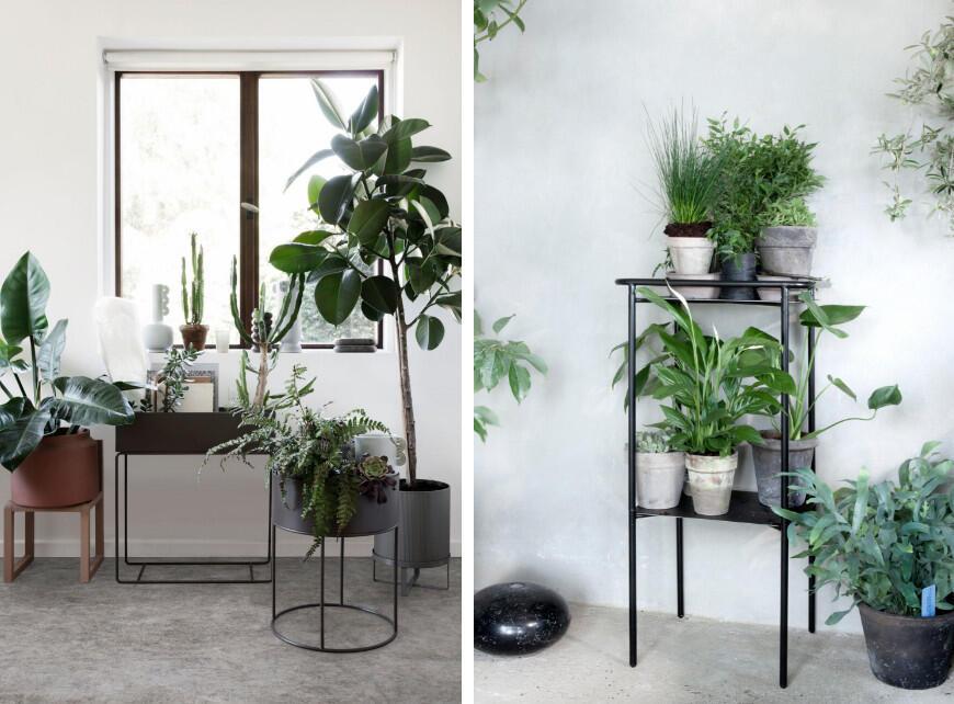 Sfeerbeeld 4 - Tropische planten