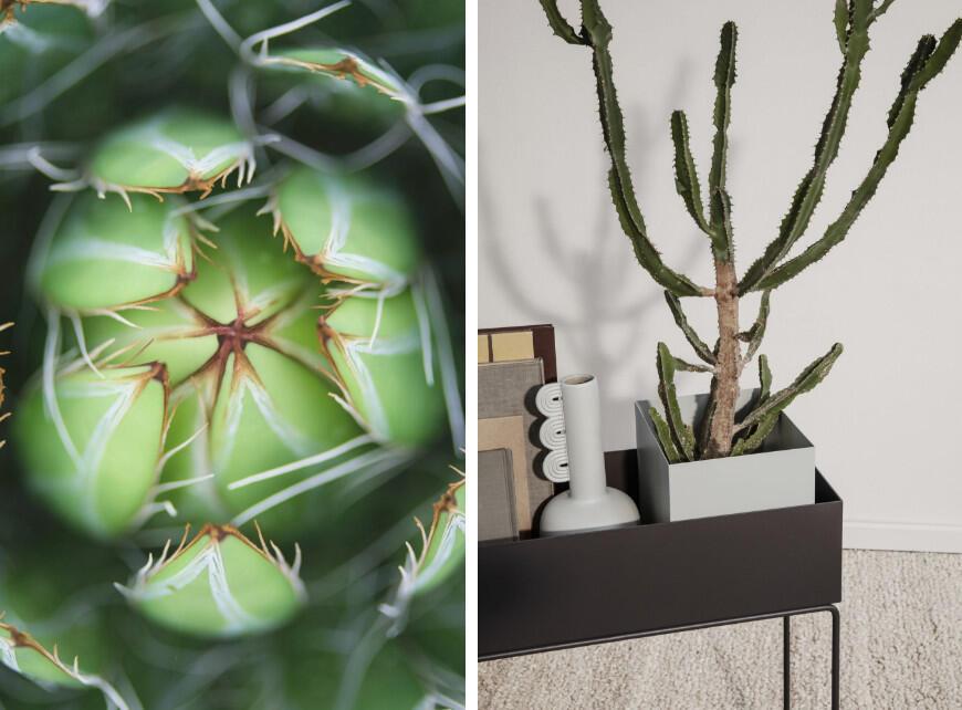 Sfeerbeeld 3 - Tropische planten