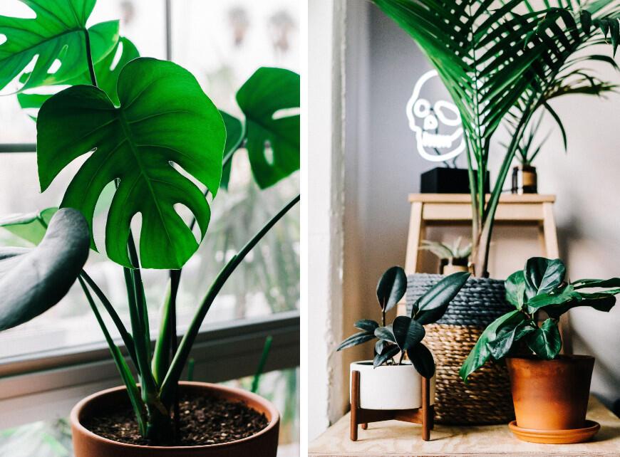 Luchtzuiverende planten - Sfeerbeeld 1