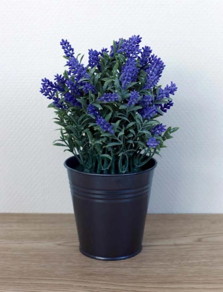 Lavendel in emmer