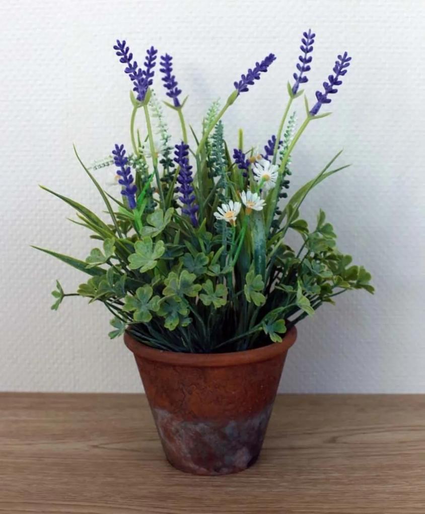 Lavendel in pot klein