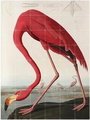 Teylers Museum Flamingo Wandsysteem 120 x 160 cm