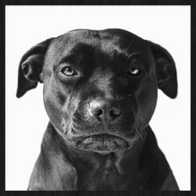 Wandkraft | Wanddecoratie Faces Dog hoogte 74 cm x breedte 74 cm multicolour decoratieve wandobjecten forex wanddeco decoratie | NADUVI outlet