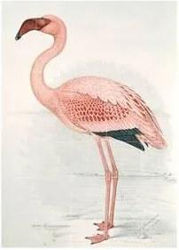 Greater Flamingo Wandsysteem 100 x 140 cm