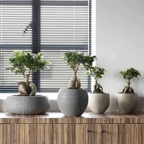 Japanse Bonsai - Set van 2