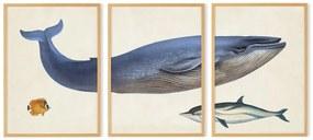 Vintage Whale illustratie van het Natural History Museum set van 3 ingelijste prints A2, meerkleurig