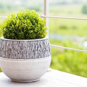 Set van 6 - Buxus Sempervirens Zonder Plantenvoeding