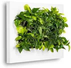 Levende Plantenschilderij LivePicture 2 Wit 112 x 72 x 7 cm incl. planten