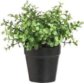 Eucalytus plant in pot - zwart - 20 cm - Leen Bakker