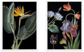 Vintage Dark Florals set van 2 illustraties, illustratie door het Natural History Museum, ingelijste print, A2, meerkleurig
