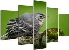 Schilderij - Grauwe vliegenvanger (150x105 cm), 40 andere afmetingen