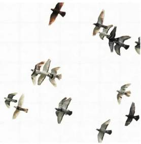 Birds wanddecoratie