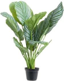 Calathea Orbifolia in pot - groen - 60 cm - Leen Bakker