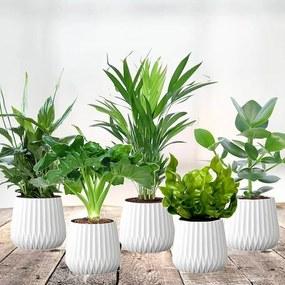 Luchtzuiverende planten mix - Set van 5