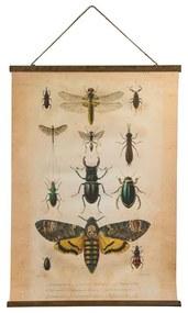 Vintage poster - insecten - 50x70 cm