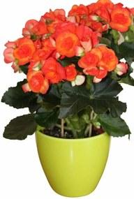Bloempot - Plantenpot - Kunststof - Kamerplanten - Glad design - Lime groen - 17 cm