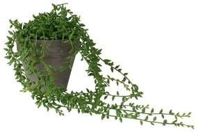 Hangplantje in potje - spits blad