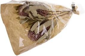 Droogbloem tropische kegelbloem
