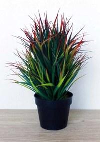 Plant in pot Elin roodgroen middel