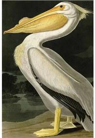 Goossens Schilderij Yellow Pelican, 80 x 120 cm excl frame