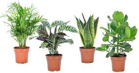 Easycare planten mix - Set van 4