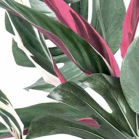 KEK Amsterdam Monstera Botanical leaves behang wit