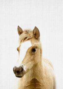 Print 330 Horse