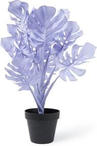 &Klevering Monstera plant 45 cm