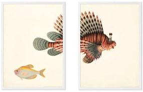 Vintage Fish illustratie van het Natural History Museum set van 2 ingelijste prints A3, meerkleurig