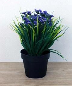 Plantjes in pot Liz paars
