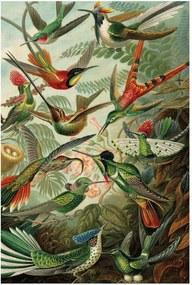 KEK Amsterdam Exotic Birds houten wandpaneel