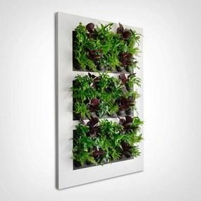 LivePicture XL, levend planten schilderij