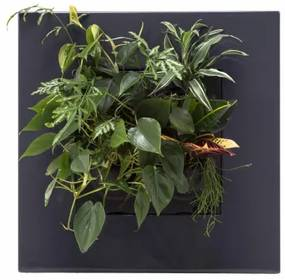 Levende Plantenschilderij LivePicture GO Antraciet 52 x 52 x 11 cm incl. planten