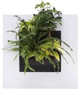 LivePicture GO wit, levend planten schilderij