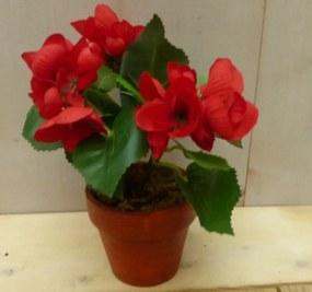 Kunstbegonia rood mini