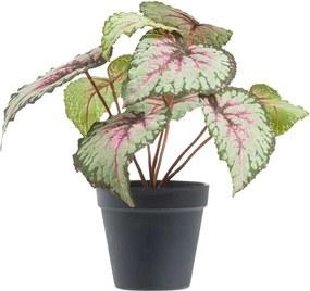 Begonia in pot - grijs/roze/zwart - 25 cm - Leen Bakker
