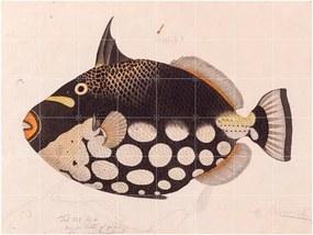 IXXI Black Fish wanddecoratie