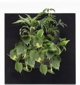 LivePicture GO zwart, levend planten schilderij