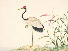 Red Crowned Crane . John Reeves