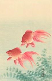 Twee goudvissen