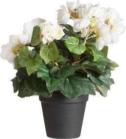 Begonia in pot - 35 cm - Leen Bakker