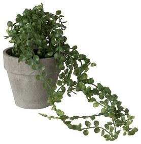 Hangplantje in potje - rond blad